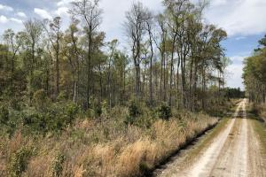 Pineland Woodsville Rd 33 ac Hunting / Rec. Land in Jasper, SC (28 of 36)