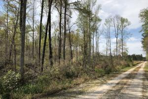 Pineland Woodsville Rd 33 ac Hunting / Rec. Land in Jasper, SC (26 of 36)