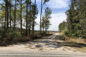 Pineland Woodsville Rd 33 ac Hunting / Rec. Land in Jasper, SC (35 of 36)