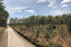 Pineland Woodsville Rd 33 ac Hunting / Rec. Land in Jasper, SC (20 of 36)