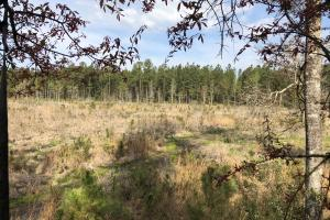 Pineland Woodsville Rd 33 ac Hunting / Rec. Land in Jasper, SC (12 of 36)