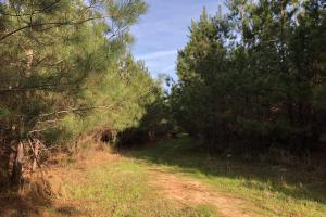 Timber Investment Hunting Homesite in Lauderdale, MS (11 of 27)