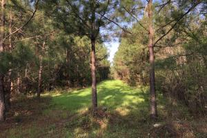 Timber Investment Hunting Homesite in Lauderdale, MS (3 of 27)
