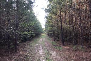 Timber Investment Hunting Homesite in Lauderdale, MS (4 of 27)