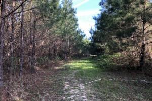 Timber Investment Hunting Homesite in Lauderdale, MS (10 of 27)