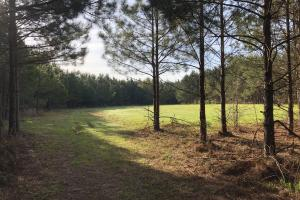 Timber Investment Hunting Homesite - Lauderdale County MS