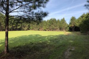 Timber Investment Hunting Homesite in Lauderdale, MS (20 of 27)