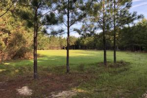 Timber Investment Hunting Homesite in Lauderdale, MS (12 of 27)