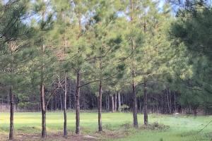 Timber Investment Hunting Homesite in Lauderdale, MS (17 of 27)