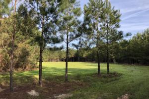 Timber Investment Hunting Homesite in Lauderdale, MS (19 of 27)