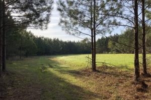 Timber Investment Hunting Homesite in Lauderdale, MS (7 of 27)