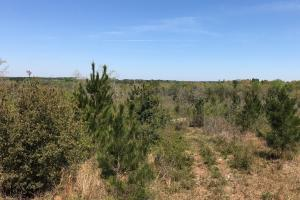 Murder Creek Timber and Hunting Tract in Pearl River, MS (3 of 15)