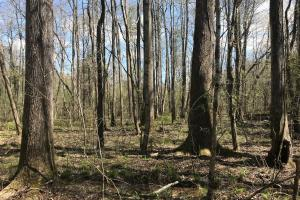 Bogue Creek Hunting and Timber Investment Tract - Lamar County AL