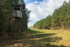 Chappells Hunting & Timberland  - Newberry County SC