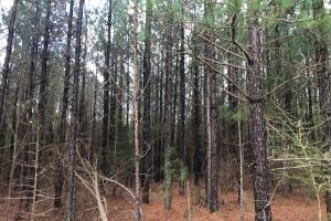 Chappells Hunting & Timberland  in Newberry, SC (11 of 43)