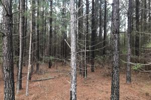 Chappells Hunting & Timberland  in Newberry, SC (37 of 43)
