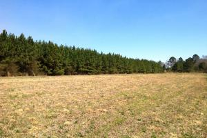 Photo 14 of 14  ·  river front land for sale ga, ga hunting land for sale