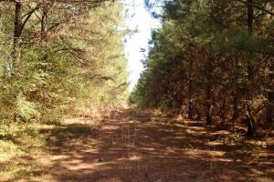 Photo 3 of 14  ·  river front land for sale ga, ga hunting land for sale