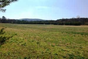 Photo 4 of 14  ·  river front land for sale ga, ga hunting land for sale