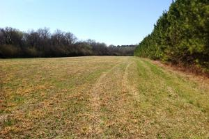 Photo 10 of 14  ·  river front land for sale ga, ga hunting land for sale