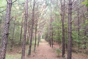 Turn Key Hunting Camp in Attala, MS (19 of 30)
