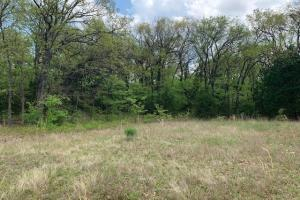 Thick wooded 10 ac tract in Payne Springs  (3 of 3)