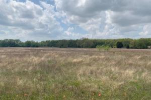 15.5 ac in Payne Springs Great Mix of Timber and Meadow, Pond - Henderson County TX