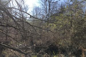 More thicket (11 of 20)