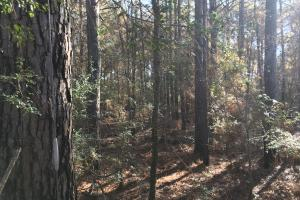 Great Hunting/ Timber Tract in West Carroll Parish I