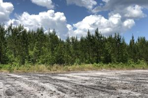 Cane Bay Area 3 Acre Home Site - Berkeley County SC