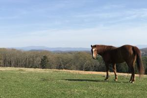 Mountain View Farm Estate in Loudon, TN (18 of 28)