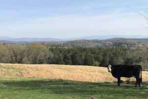 Mountain View Farm Estate - Loudon County TN