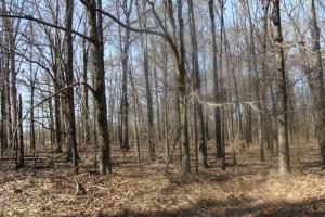 Timber and Hunting Tract in Prairie, AR (8 of 44)