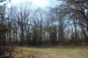 Timber and Hunting Tract in Prairie, AR (4 of 44)