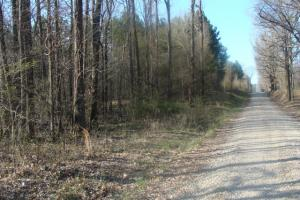 Timber and Hunting Tract in Prairie, AR (35 of 44)