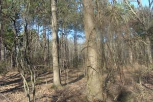 Timber and Hunting Tract in Prairie, AR (26 of 44)