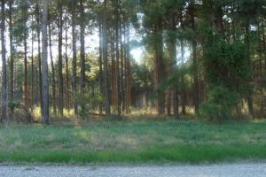 Timber and Hunting Tract in Prairie, AR (39 of 44)