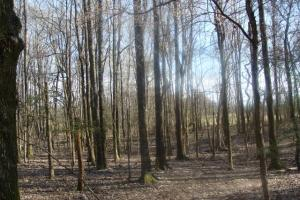 Timber and Hunting Tract in Prairie, AR (25 of 44)