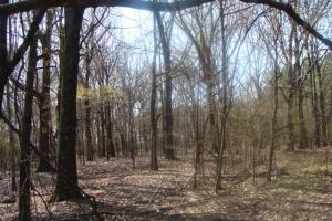 Timber and Hunting Tract in Prairie, AR (24 of 44)