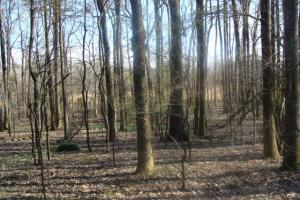Timber and Hunting Tract in Prairie, AR (34 of 44)