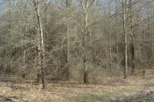Timber and Hunting Tract in Prairie, AR (16 of 44)