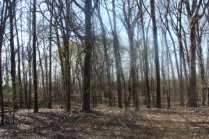 Timber and Hunting Tract in Prairie, AR (6 of 44)