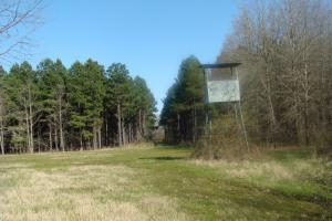 Timber and Hunting Tract in Prairie, AR (13 of 44)