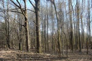 Timber and Hunting Tract in Prairie, AR (22 of 44)
