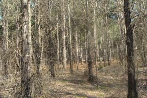 Timber and Hunting Tract in Prairie, AR (18 of 44)