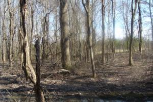 Timber and Hunting Tract in Prairie, AR (29 of 44)