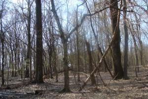 Timber and Hunting Tract in Prairie, AR (27 of 44)