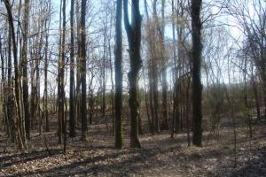 Timber and Hunting Tract in Prairie, AR (21 of 44)