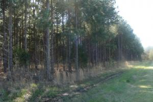 Timber and Hunting Tract - Prairie County AR