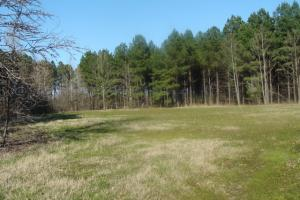 Timber and Hunting Tract in Prairie, AR (14 of 44)